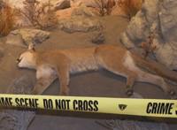 wildlifeforensics