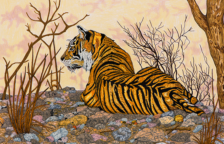 resting tiger by inmate
