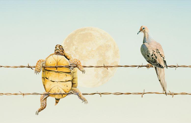 Turtle Dove by Dennis McGregor
