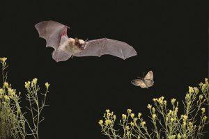 Bat Walk @ High Desert Museum | Bend | Oregon | United States