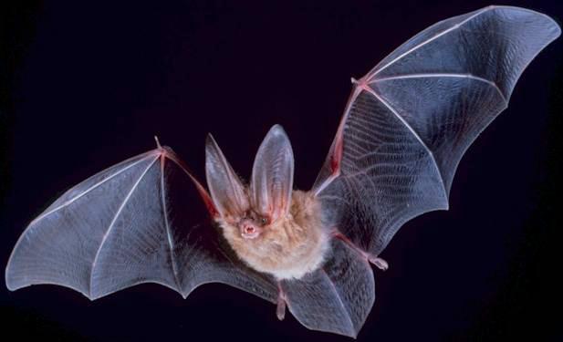 Bat Walk @ The High Desert Museum