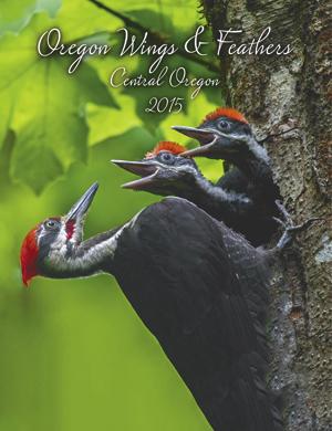 PileatedWoodpeckers